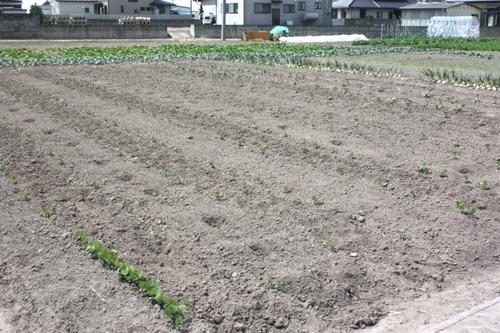 0529オモイデゴハンの畑01.JPG
